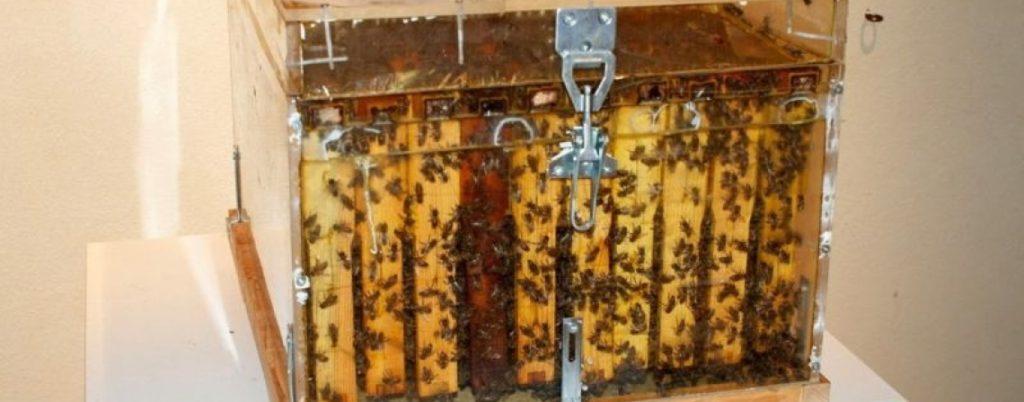 Пчелиный улей на Родосе