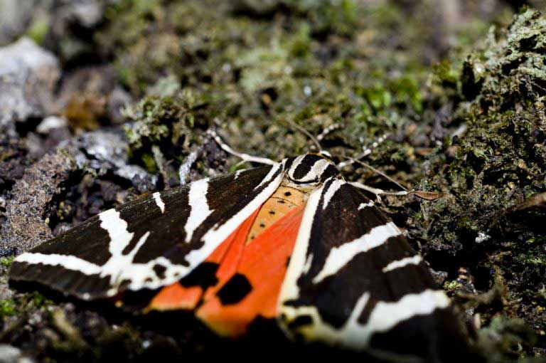 Бабочки на острове Родос
