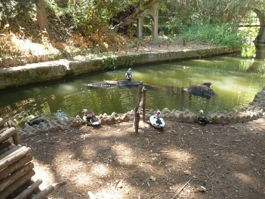 Единственные животные которых мы встретили в Парке Родини