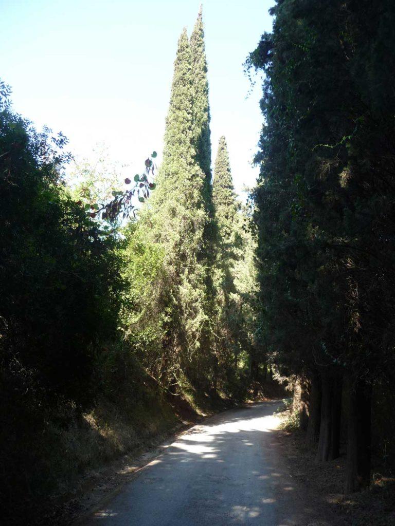 Кипарисы в парке Родини