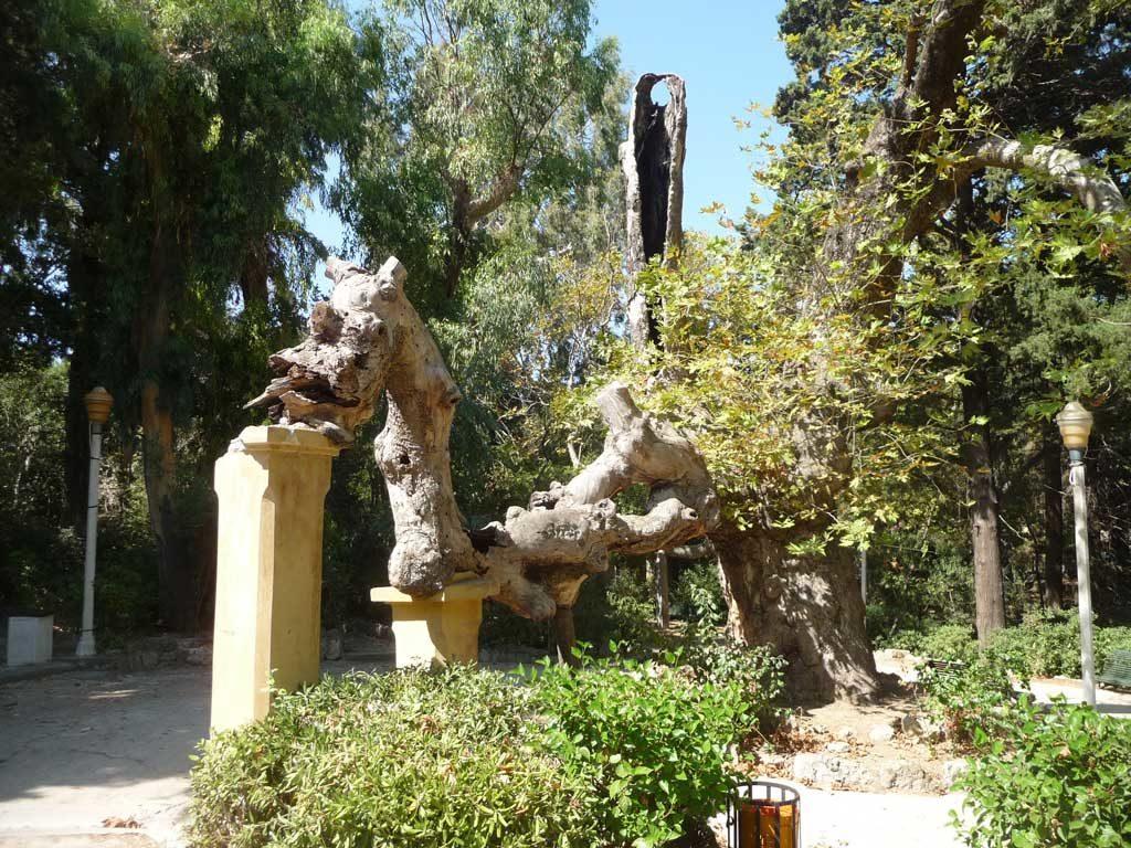 Дерево похожее на дракона в парке Родини