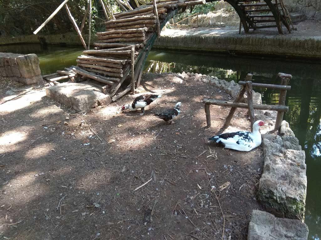 Гуси в парке Родини