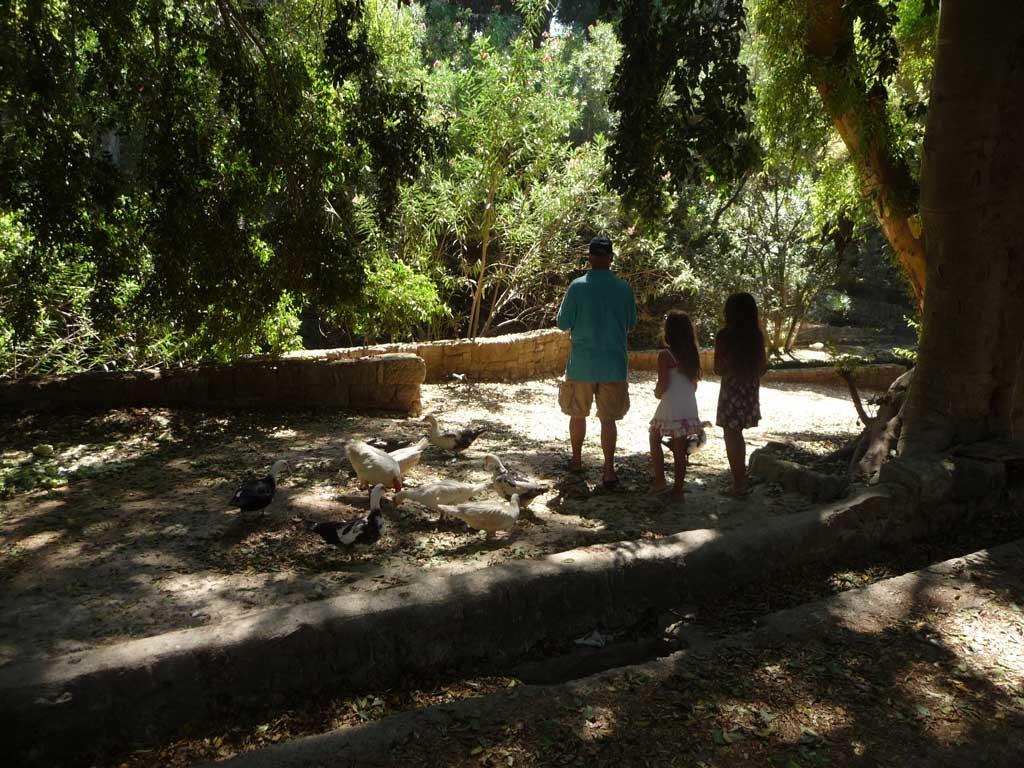 Кормление гусей в парке Родини