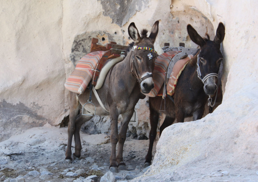 Линдос такси ослики на острове Родос