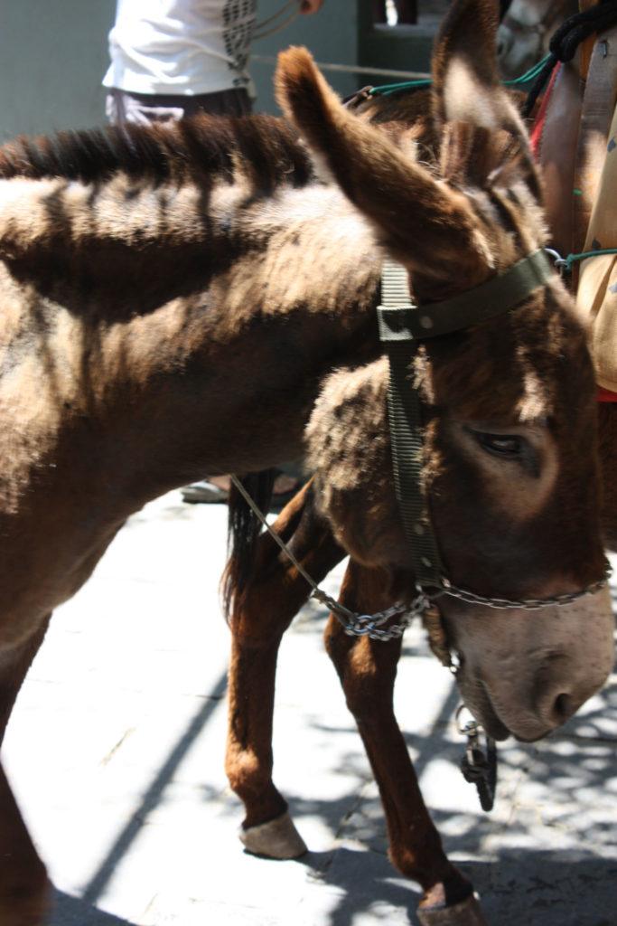 Линдос такси ослик на острове Родос