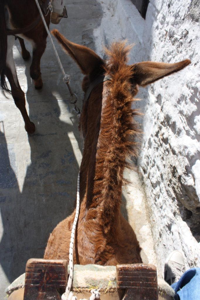 Линдос такси ослик у стены на острове Родос