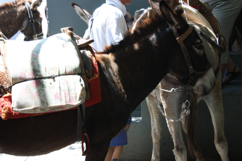 Линдос такси ослик в загоне на острове Родос