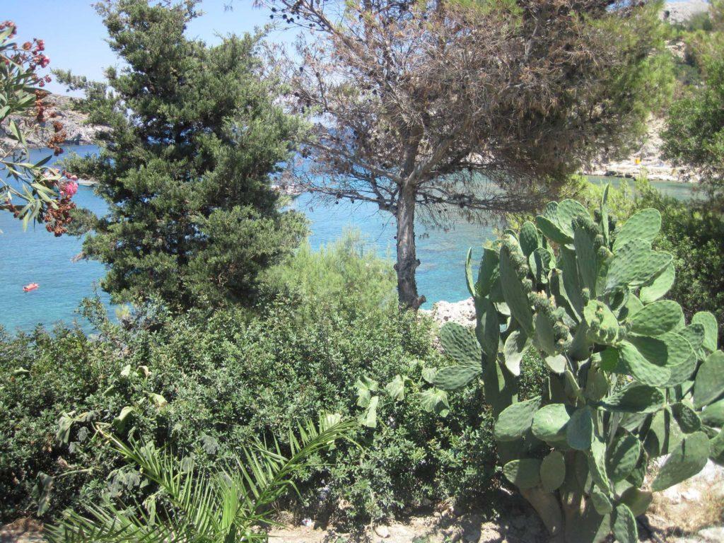 Пышная средиземноморская растительность в бухте