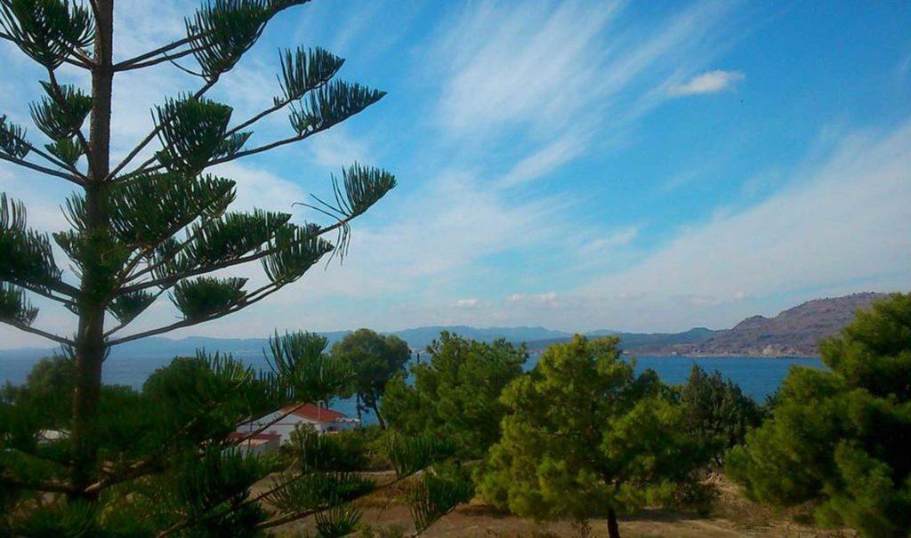 """Сосны, по гречески """"пефки"""", в честь которых назван курорт на острове Родос"""