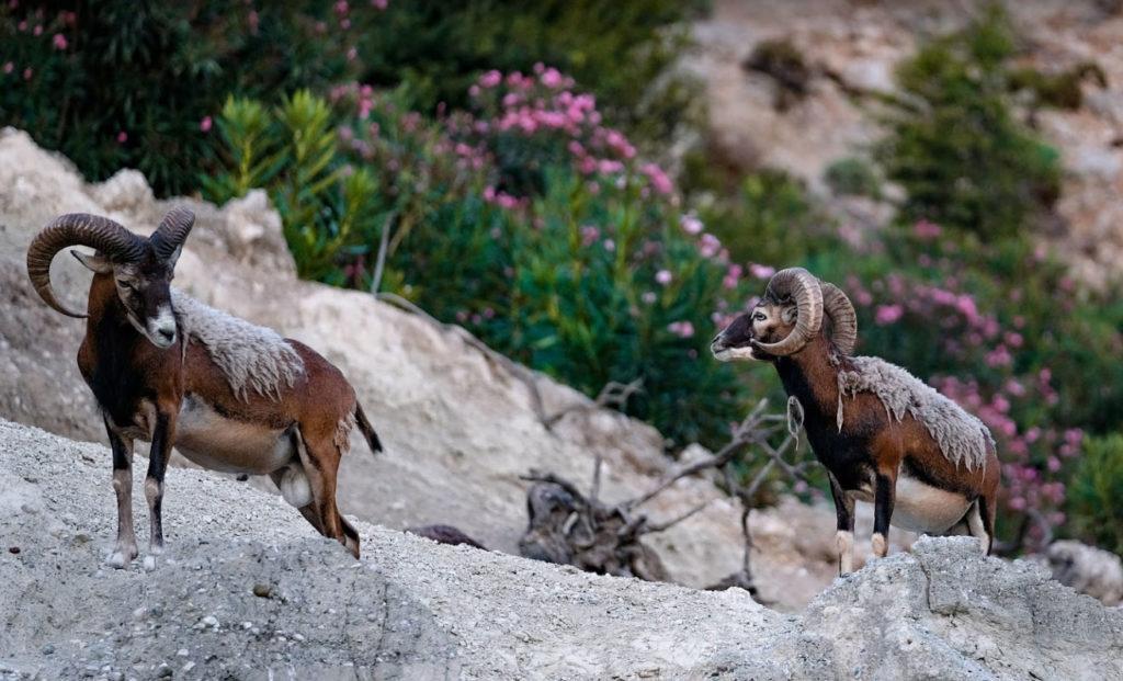 Зоопарк на открытом воздухе в Фалираки